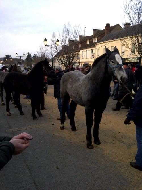 Saint-Léger-sur-Sarthe-20101127-00045